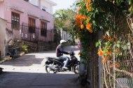 Des fleurs et un scooter